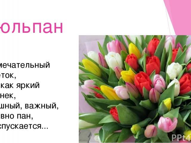Тюльпан Замечательный цветок, Он как яркий огонек, Пышный, важный, словно пан, Распускается...