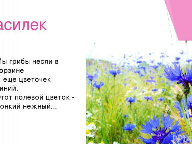 Василек Мы грибы несли в корзине И еще цветочек синий. Этот полевой цветок - Тонкий нежный...