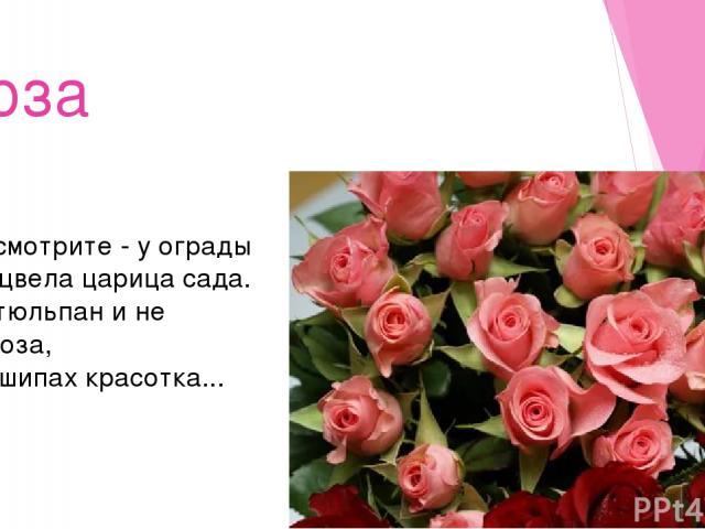 Роза Посмотрите - у ограды Расцвела царица сада. Не тюльпан и не мимоза, А в шипах красотка...
