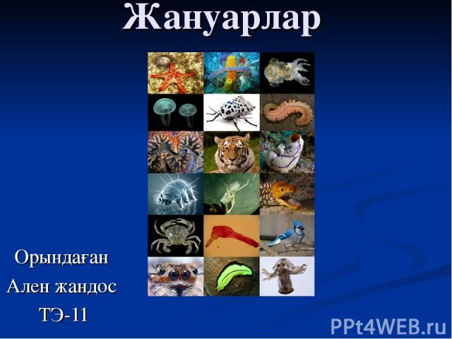 Жануарлар Орындаған Ален жандос ТЭ-11