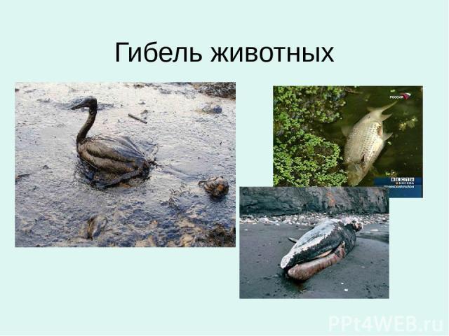 Гибель животных