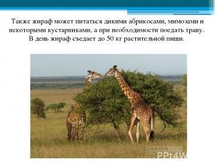 Также жираф может питаться дикими абрикосами, мимозами и некоторыми кустарниками