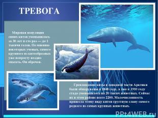 ТРЕВОГА Мировая популяция синих китов уменьшилась за 30 лет в сто раз — до 1 тыс