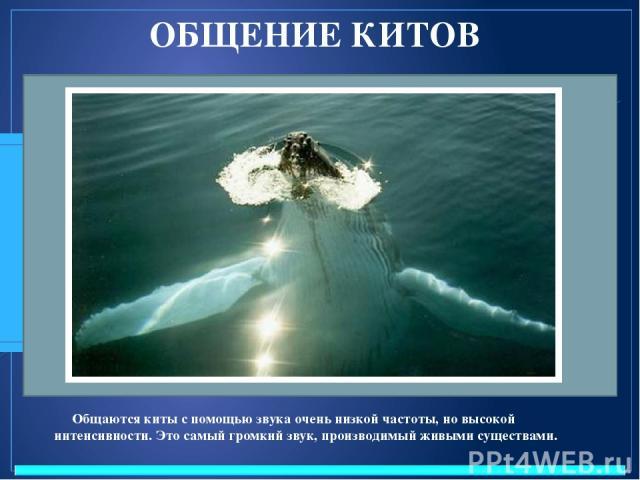 ОБЩЕНИЕ КИТОВ Общаются киты с помощью звука очень низкой частоты, но высокой интенсивности. Это самый громкий звук, производимый живыми существами.