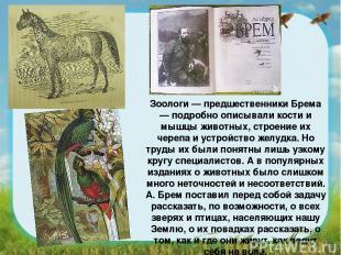 Зоологи — предшественники Брема — подробно описывали кости и мышцы животных, стр