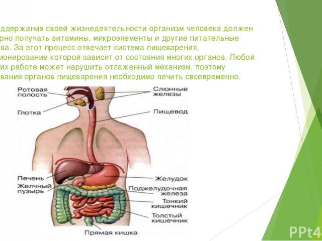 Для поддержания своей жизнедеятельности организм человека должен регулярно получать витамины, микроэлементы и другие питательные вещества. За этот процесс отвечает система пищеварения, функционирование которой зависит от состояния многих органов. Лю…