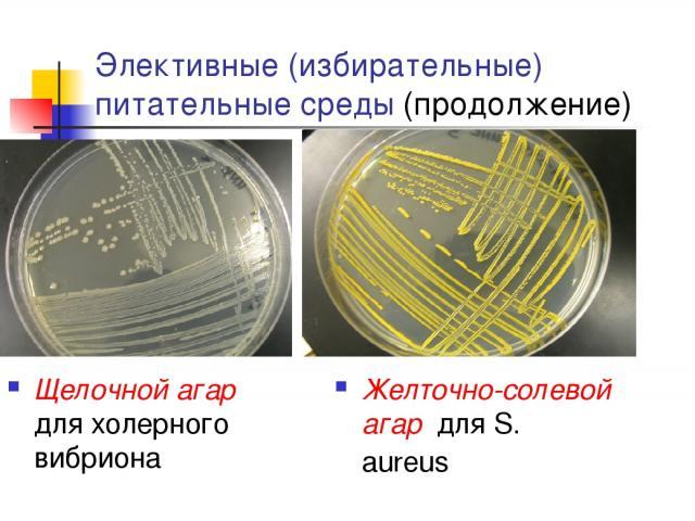 Элективные (избирательные) питательные среды (продолжение) Щелочной агар для холерного вибриона Желточно-солевой агар для S. aureus