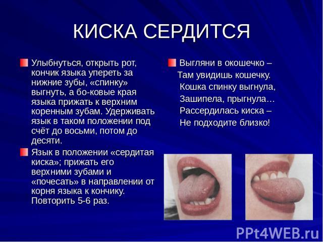 КИСКА СЕРДИТСЯ Улыбнуться, открыть рот, кончик языка упереть за нижние зубы, «спинку» выгнуть, а бо ковые края языка прижать к верхним коренным зубам. Удерживать язык в таком положении под счёт до восьми, потом до десяти. Язык в положении «сердитая …