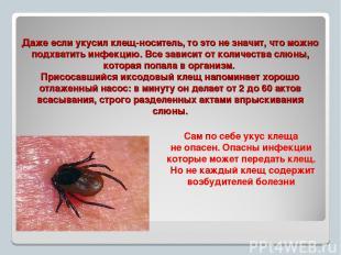 Даже если укусил клещ-носитель, то это не значит, что можно подхватить инфекцию.