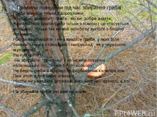 Правила поведінки під час збирання грибів: Гриби збирати тільки з дорослими; Пот