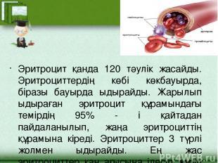 Эритроцит қанда 120 тәулік жасайды. Эритроциттердің көбі көкбауырда, біразы бауы