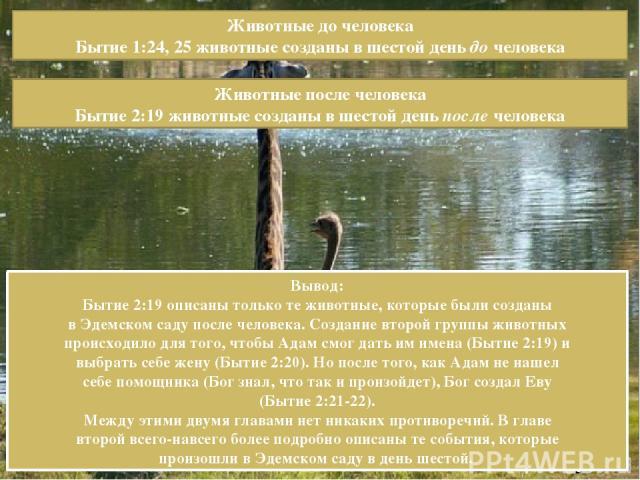 Животные до человека Бытие 1:24, 25 животные созданы в шестой день до человека Животные после человека Бытие 2:19 животные созданы в шестой день после человека Вывод: Бытие 2:19 описаны только те животные, которые были созданы в Эдемском саду после …