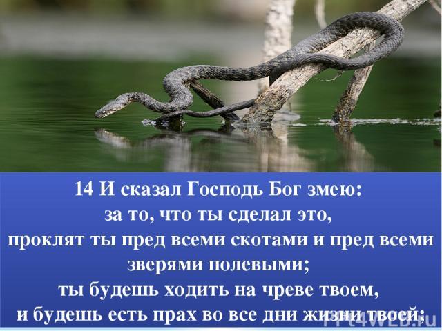 14 И сказал Господь Бог змею: за то, что ты сделал это, проклят ты пред всеми скотами и пред всеми зверями полевыми; ты будешь ходить на чреве твоем, и будешь есть прах во все дни жизни твоей;
