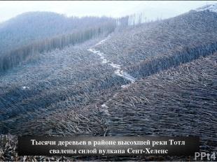 Тысячи деревьев в районе высохшей реки Тотл свалены силой вулкана Сент-Хеленс