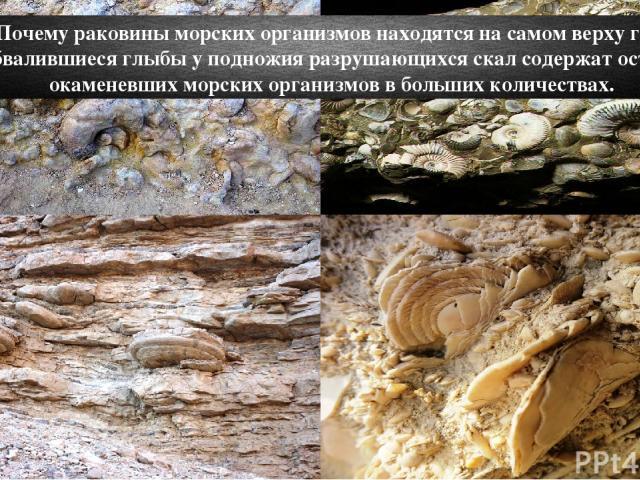 Почему раковины морских организмов находятся на самом верху гор? Обвалившиеся глыбы у подножия разрушающихся скал содержат остатки окаменевших морских организмов в больших количествах.