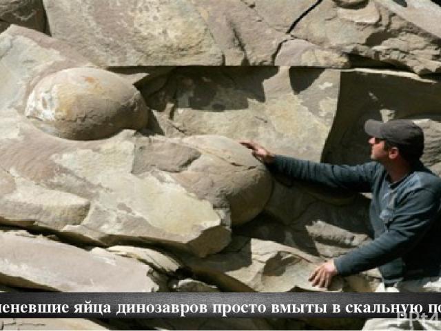 Окаменевшие яйца динозавров просто вмыты в скальную породу