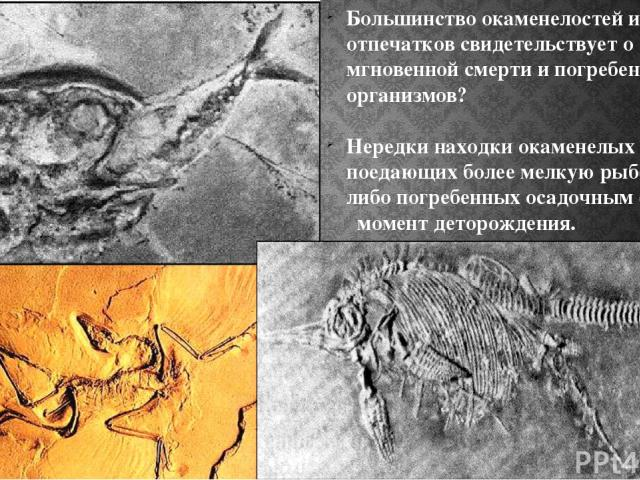 Большинство окаменелостей и отпечатков свидетельствует о мгновенной смерти и погребении организмов? Нередки находки окаменелых рыб, поедающих более мелкую рыбешку, либо погребенных осадочным слоем в момент деторождения.
