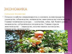 Сельское хозяйствоспециализируется, в основном, на виноградарстве, садоводстве,