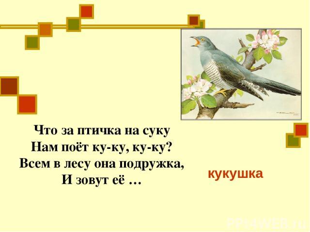 Что за птичка на суку Нам поёт ку-ку, ку-ку? Всем в лесу она подружка, И зовут её … кукушка