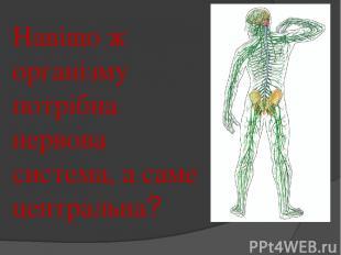 Навіщо ж організму потрібна нервова система, а саме центральна?
