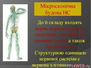Мікроскопічна будова НС До її складу входять нерви, нервові вузли та сплетіння,
