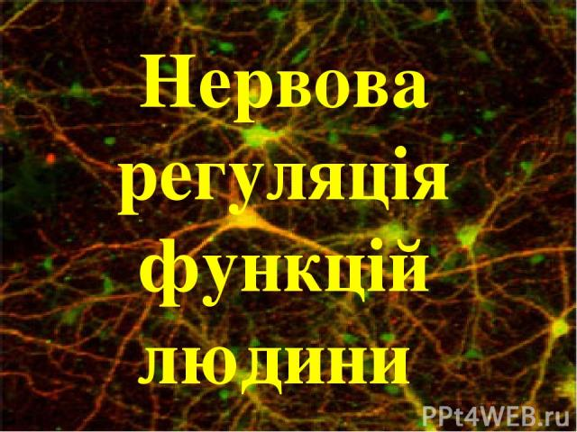 Нервова регуляція функцій людини