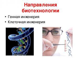Направления биотехнологии Генная инженерия Клеточная инженерия