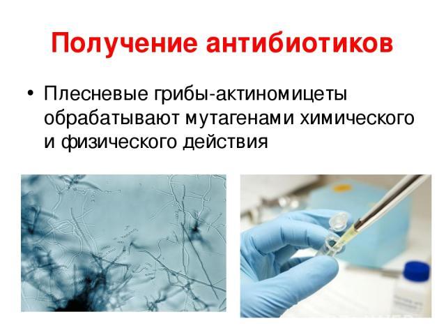 Получение антибиотиков Плесневые грибы-актиномицеты обрабатывают мутагенами химического и физического действия