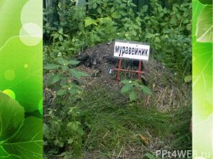 «Маленькая страна для лесных жителей»