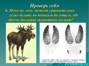 Проверь себя 6. Почему лось может сравнительно легко бегать по топким болотам, г