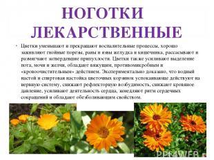 НОГОТКИ ЛЕКАРСТВЕННЫЕ Цветки уменьшают и прекращают воспалительные процессы, хор