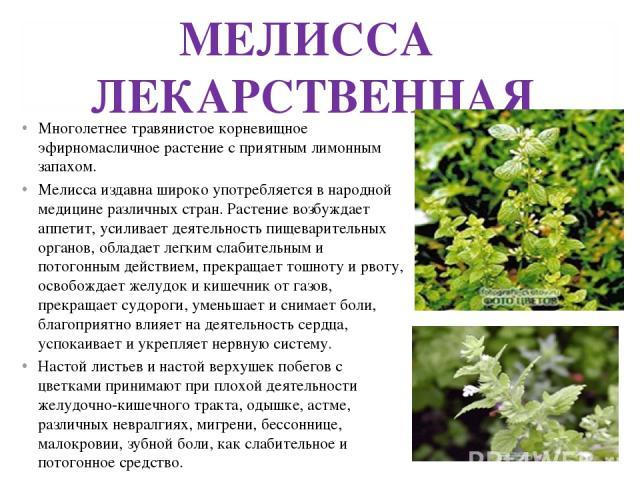 МЕЛИССА ЛЕКАРСТВЕННАЯ Многолетнее травянистое корневищное эфирномасличное растение с приятным лимонным запахом. Мелисса издавна широко употребляется в народной медицине различных стран. Растение возбуждает аппетит, усиливает деятельность пищеварител…