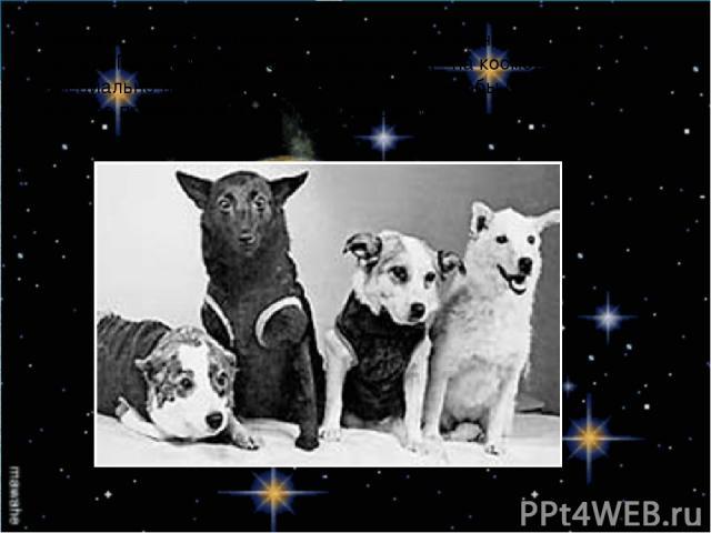 Затем в космосе побывала Чернушка и последней , накануне полета Гагарина, была собака Звездочка –на космодром специально возили будущих космонавтов, чтобы они увидели, как все происходит и удачно завершается.