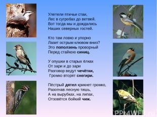 Улетели птичьи стаи, Лес в сугробах до ветвей. Вот тогда мы и дождались Наших се