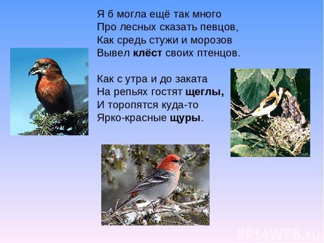 Я б могла ещё так много Про лесных сказать певцов, Как средь стужи и морозов Вывел клёст своих птенцов. Как с утра и до заката На репьях гостят щеглы, И торопятся куда-то Ярко-красные щуры.