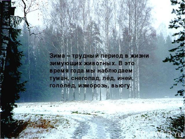 Зима – трудный период в жизни зимующих животных. В это время года мы наблюдаем туман, снегопад, лёд, иней, гололёд, изморозь, вьюгу.