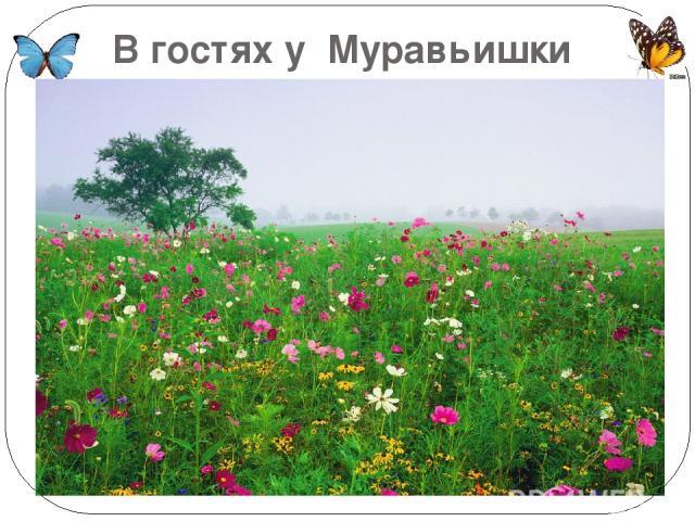 В гостях у Муравьишки Вопросика и его друзей
