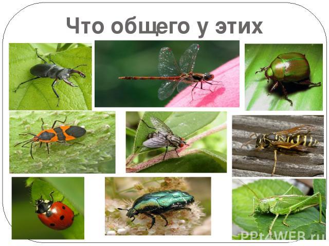 Что общего у этих животных?