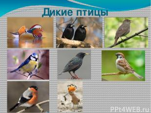 Дикие птицы