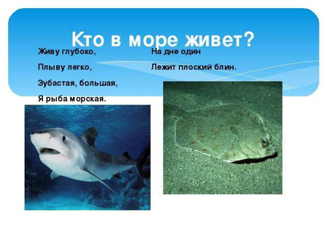 Кто в море живет? Живу глубоко, Плыву легко, Зубастая, большая, Я рыба морская. На дне один Лежит плоский блин.