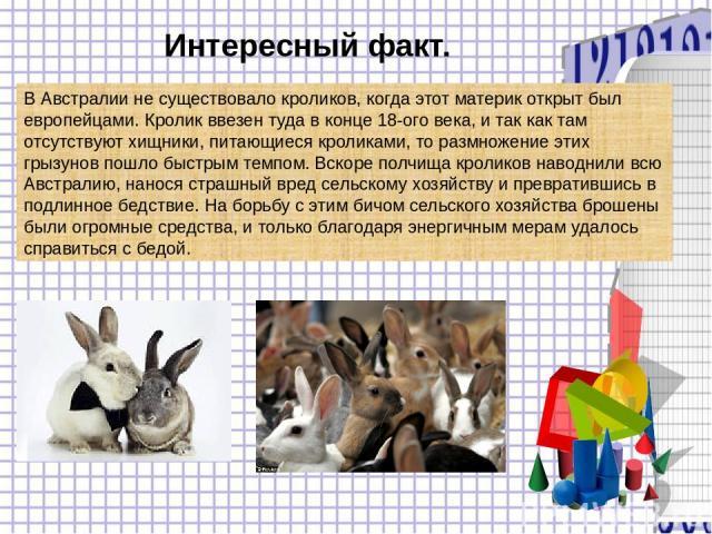 Интересный факт. В Австралии не существовало кроликов, когда этот материк открыт был европейцами. Кролик ввезен туда в конце 18-ого века, и так как там отсутствуют хищники, питающиеся кроликами, то размножение этих грызунов пошло быстрым темпом. Вск…