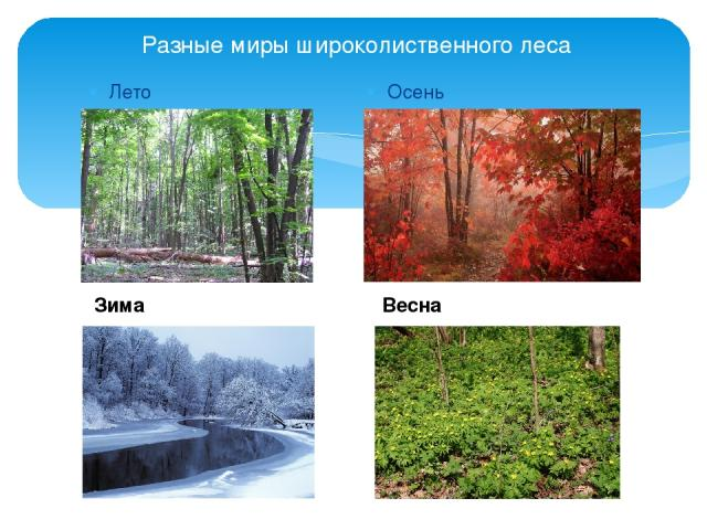 Разные миры широколиственного леса Лето Осень Зима Весна
