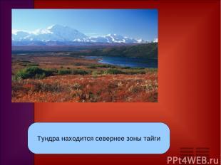 тундра Тундра находится севернее зоны тайги