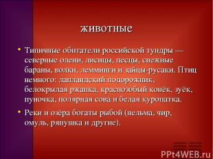 животные Типичные обитатели российской тундры — северные олени, лисицы, песцы, с