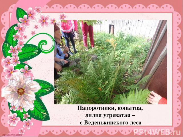 Папоротники, копытца, лилия угреватая – с Веденькинского леса