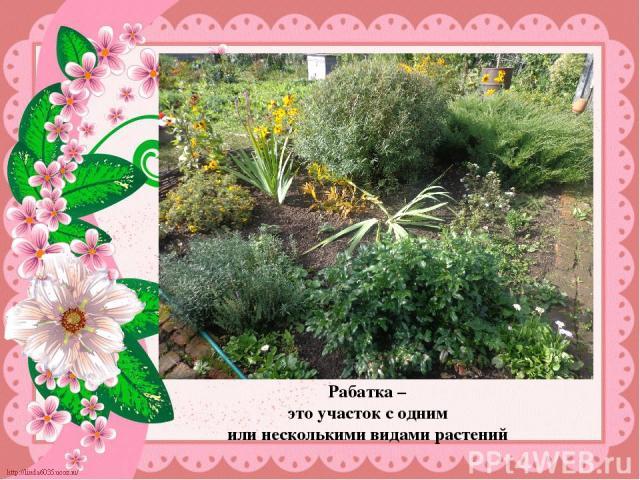 Рабатка – это участок с одним или несколькими видами растений Рабатка – это участок, с одним или несколькими видами растений