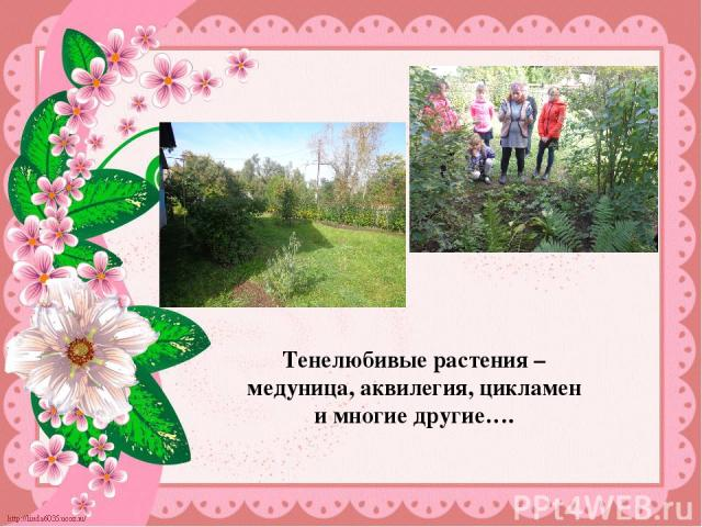 Тенелюбивые растения – медуница, аквилегия, цикламен и многие другие….