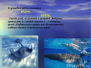 К хрящевым рыбам относятся акулы, скаты. . Скелет у них не костный, а хрящевой.