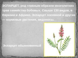 ЭСПАРЦЕТ, род главным образом многолетних трав семейства бобовых. Свыше 130 видо