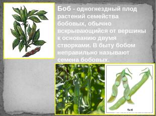 Боб - одногнездный плод растений семейства бобовых, обычно вскрывающийся от верш